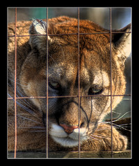 Bergeron's Exotic Animal Sanctuary is OPEN for another year! (Single RAW capture HDR)