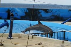 Il est faux decroire que les tours exécutés sont stimulants pour les animaux : (CaptiveDolphins-vs-WildDolphins) Tags: malta dolphins shame delphinarium malte mediteraneo maltagozo marinelands mediterraneomarinepark captivedolphins themediteranneomarineparkinmaltaisashame unehonte unaverguenza dauphinscaptifs themediteranneomarineparkinsliemathemediteranneomarineparkinmalta themediteranneomarinepark dauphinsdelfines delfinescautivos