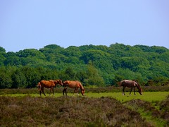 more horses (Tasmin_Bahia) Tags: blue trees summer england sky horses colour green nature beautiful grass leaves outside outdoors leaf scenery pretty peace shadows natural bright peaceful sunny calm fresh colourful simple magical