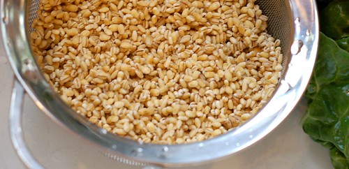 Rinsing the Barley by Eve Fox, Garden of Eating blog, copyright 2011