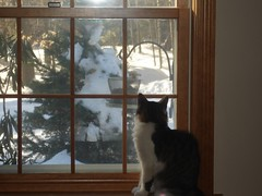 Cat looking at bird feeder