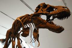 Dinosaurskjelett - Foto: Mike Shaver
