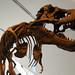 Dinosaur by shvmoz, on Flickr