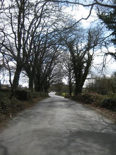 Túnel de árbores