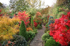 Autumn garden early morning (Four Seasons Garden) Tags: uk november autumn red england west colour english fall nature beautiful marie stone gardens garden four japanese maple day all colours open seasons mail picture peaceful competition daily tony foliage national fourseasons winner scheme urbangarden staffordshire newton conifers walsall englishgarden midlands dailymail blackcountry ngs nationalgardenscheme yorkstone shc acers saveearth fourseasonsgarden gardenstosee charityopendays