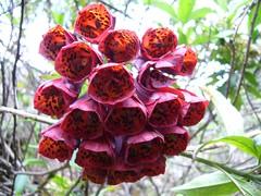 Trek Inka Trail fleurs