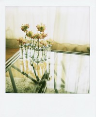 glasses (mamako7070) Tags: flowers stilllife plants flower polaroid instantcamera sun660 naturesfinest instantfilm filmshot theperfectphotographer