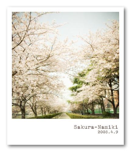 R0013684 : Sakura-Namiki
