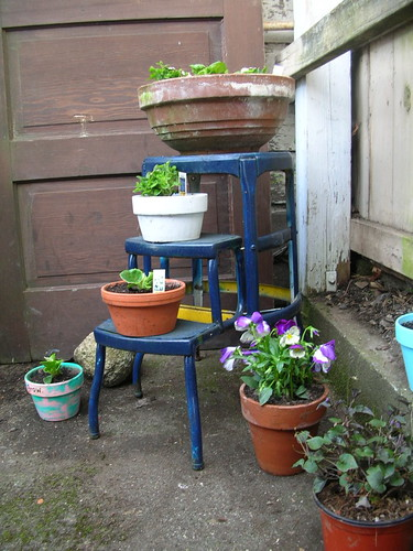 Step Ladder with Plants
