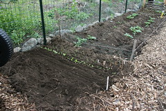 new beet and oinion bed