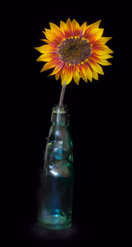 Sunflower and Bottle