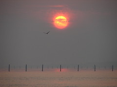 Sunrise over the Pound Nets, Chesapeake Bay_6-7-08