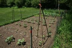 dad's garden 9
