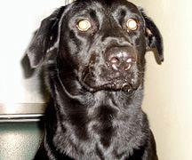 Kinship Circle - 2008-06-13 - Katrina-NOLA Rescuer Dead 01