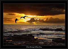 Dawn Brings A New Day (DDA / Deljen Digital Art) Tags: uk sea england sun beach nature clouds sunrise seaside rocks surf waves gulls tide northumberland northsea sunburst rays cresswell mywinners aplusphoto