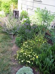 perennial garden late spring