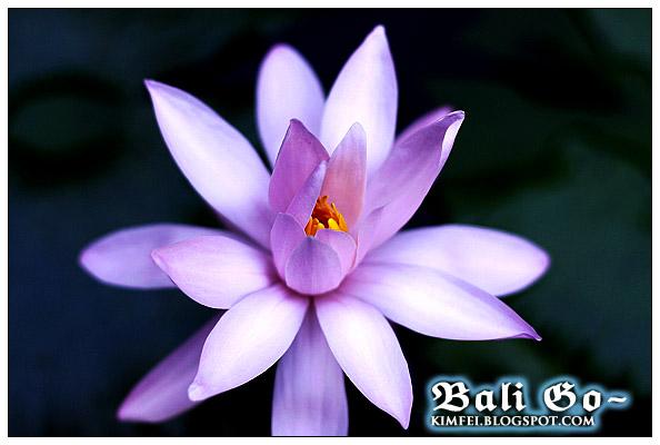1-Flower1