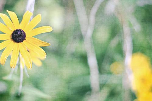 Wild Flowers Bokeh