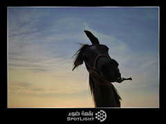 (A.Alwosaibie) Tags: light portrait sun night photo nikon shot spot saudi 1855mm ksa d60