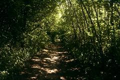 Light in the forrest (Vall) Tags: trees shadow tree nature denmark shadows forrest trer natur tr sti danmark aarhus rhus vall jylland skov skygge skygger trstamme trstammer skovsti