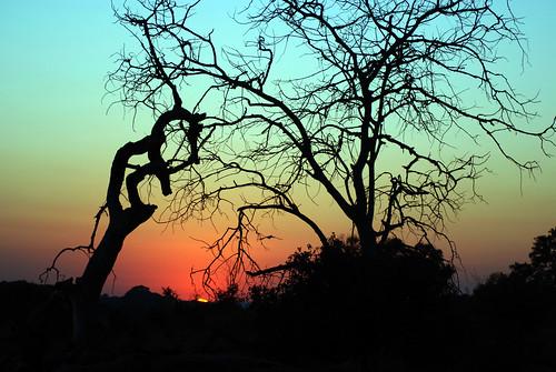 AFRIQUE DU SUD PARC kruger PARK SOUTH AFRICA