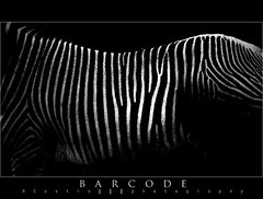 Modern Nature (RCastro) Tags: barcode bec cdigodebarras blueribbonwinner 50faves abigfave platinumphoto impressedbeauty aplusphoto visiongroup infinestyle photoexel vision100