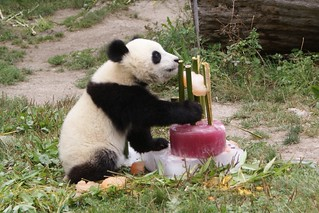 Fu Long with his birthday cake