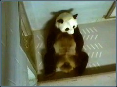 Lun Lun @ Zoo Atlanta