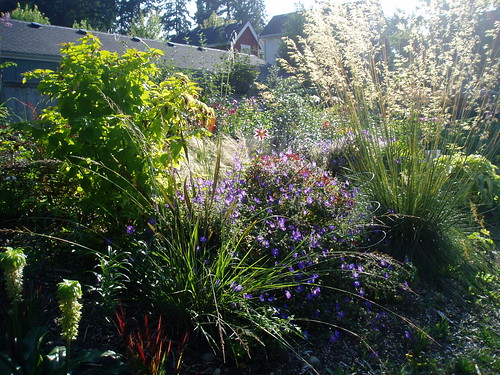 Late Summer Mixed Border
