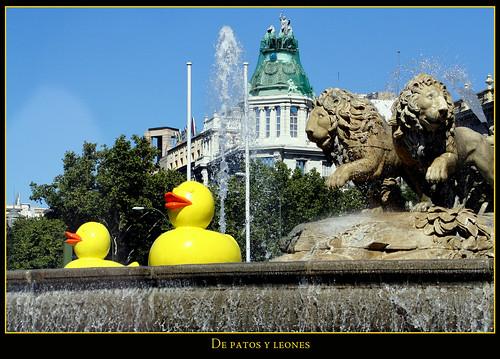 de patos y leones