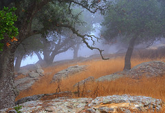morning fog on brushy peak (Marc Crumpler (Ilikethenight)) Tags: california trees usa fog sunrise canon landscape bravo hiking trails hills bayarea eastbay alamedacounty altamont ebrpd firstquality eastbayregionalparkdistrict interestingness17 i500 brushypeak tamron1750 sfchronicle96hours 40d ebparks canon40d explore19sept08 visionqualitygroup ebparksok