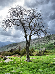 Tree (kezwan) Tags: tree nature kurdistan kezwan mywinners
