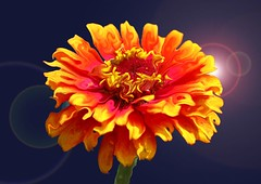 Liquid yellow (suzikakes) Tags: pink flowers orange yellow photoshop phototreatment masterphotos