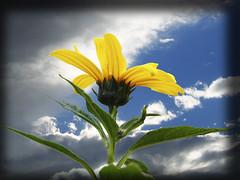 Fleur (lydia63) Tags: flickrsbest masterphotos platinumphoto 100commentgroup