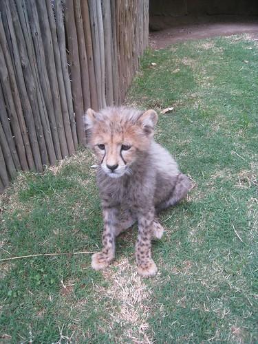 A cub sits still for a moment