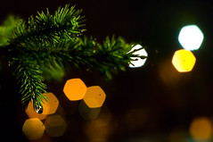 After Dark: Pine by Street Lamp (Kelly Sereda) Tags: tree water rain pine night bokeh drip supertakumar5014 hbw kellysereda pentaxk20d