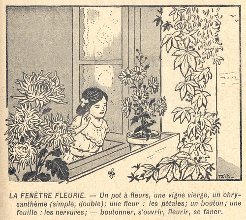 fenetre fleurie