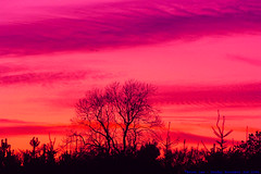 Pink naturally occurs in vibrant sunsets.