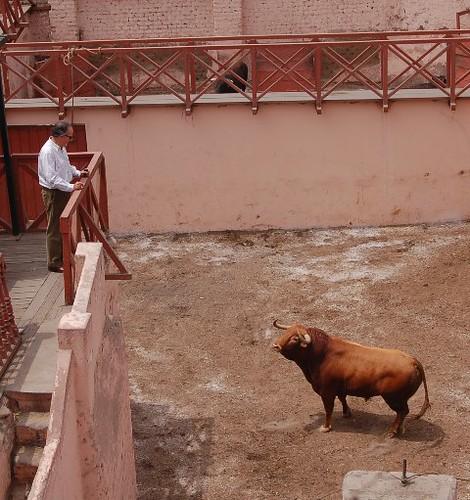 Roberto Puga en desencajonamiento de sus toros en Acho