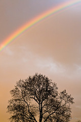 The rainstorm subsides (Raoul Pop) Tags: autumn trees fall colors silhouette clouds canon rainbow flickr seasons unitedstates time dusk saturday maryland sabbath smugmug colorspectrum northbethesda canoneos5d googlephotos