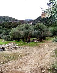 Massiccio (RoLiXiA) Tags: sardegna tree nature alberi sardinia natura campagna bosco domusnovas massiccio marganai kodakz812iszoom grottesangiovanni