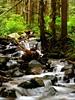 Baker Highway Creek (littlebiddle) Tags: water washington slowshutterspeed ndfilter nooksack mtbakerhighway