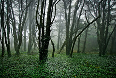Like a whisper (Lus C) Tags: wood morning mist tree rain fog forest landscape sintra biosphere environmentalism peninha deforestation thedaytheearthstoodstill d80 sustainableforestmanagement carbonoffsetprogramme