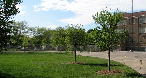 New trees and grass replaced asphalt to become the south lawn of Humboldt Park School. ~photo Jay Bullock
