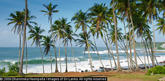 151 (Dhammika Heenpella / Images of Sri Lanka) Tags: travel sea vacation holiday travelling tourism beach nature landscape coast interesting scenery asia outdoor south southern coastal scenary vista getty environment srilanka southeast lk scape gettyimages downsouth coconuttrees holidaying tangalle scenicbeauty placesofinterest photosof tangalla southernprovince dhammikaheenpella paraiwella paraviwella theimagesofsrilanka heenpalla visitsrilanka2011 momenycollection