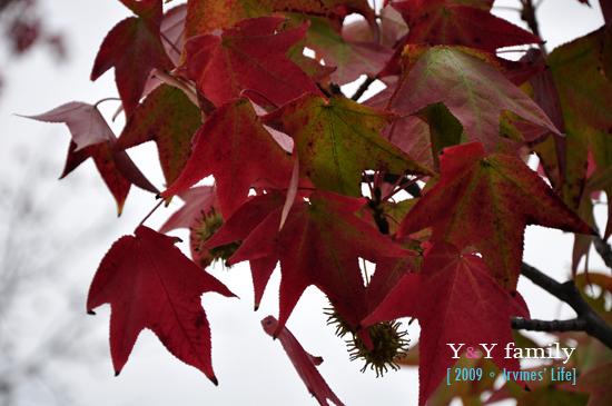 Autumn in Irvine