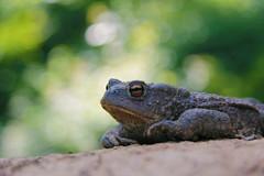 (umbo plasticphoto) Tags: green bike bmx trail toad umberto comba rospo cretaceo