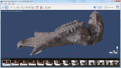 Autodesk Project Photofly - Louise Leakey's Suidae Fossil