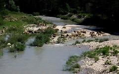 le Jabron (b.four) Tags: river sheep rivière var mouton dda pecora coth trigance cherryontop abigfave jabron diamondclassphotographer flickrdiamond citrit rubyphotographer mygearandme ruby10