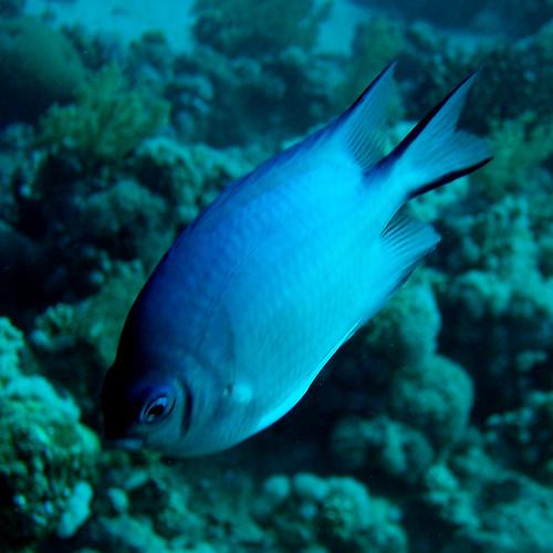 Jackfish #1